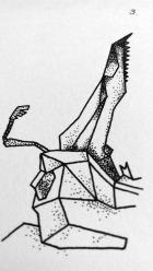 ERNST_BeetlesI-detail4