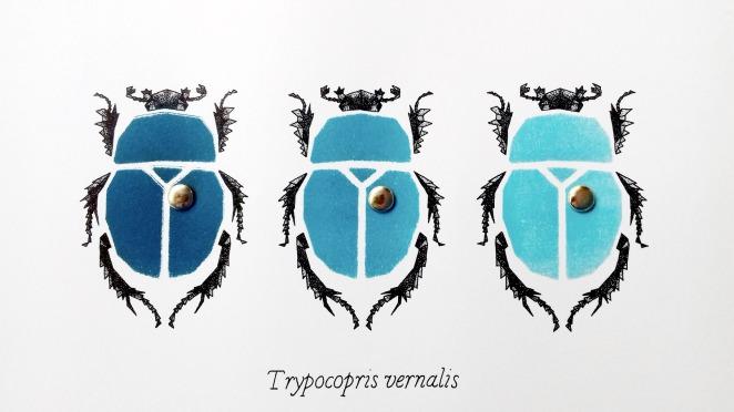 ERNST_BeetlesIV